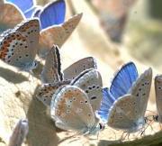 menu 300x150 vlinders